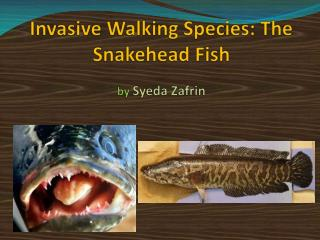 Invasive Walking Species: The Snakehead Fish by  Syeda Zafrin