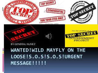 WANTED!WILD MAYFLY ON THE LOOSE!S.O.S!S.O.S!URGENT MESSAGE!!!!!