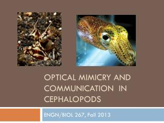 Optical Mimicry and Communication  in Cephalopods