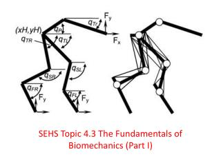 SEHS Topic 4.3 The Fundamentals of Biomechanics ( Part  I )