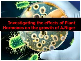 Investigating the effects of Plant Hormones on the growth of  A.Niger