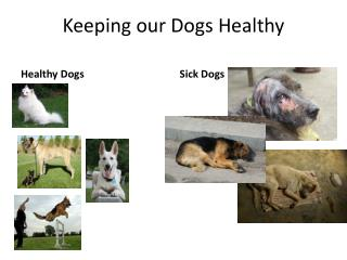 Keeping our Dogs Healthy