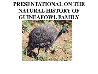 PRESENTATIONAL ON THE  NATURAL HISTORY OF GUINEAFOWL  FAMILY