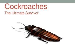 Cockroaches The Ultimate Survivor