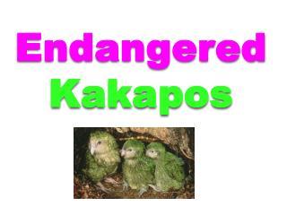 Endangered K akapos
