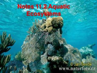 Notes 11.2 Aquatic Ecosystems