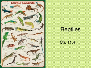 Reptiles: adaptation for life on Land