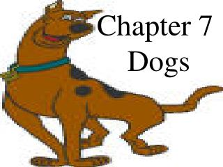 Chapter 7 Dogs