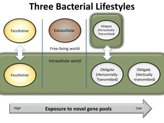 Three Bacterial Lifestyles
