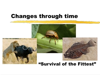 Changes through time