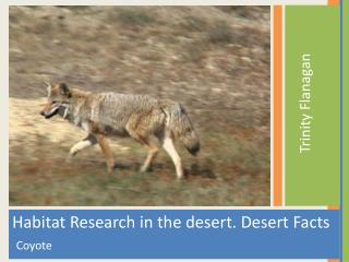 Habitat  Research in the desert. Desert Facts    Coyote