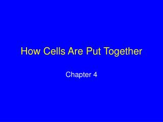 How Cells Are Put Together