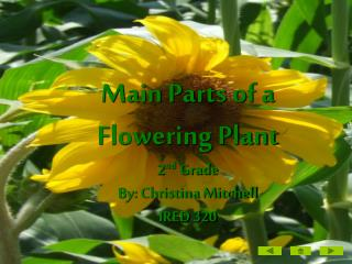 Main Parts of a Flowering Plant 2 nd  Grade By: Christina Mitchell IRED 320