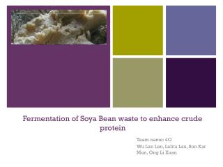Fermentation of Soya Bean waste to enhance crude protein