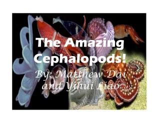 The Amazing Cephalopods!