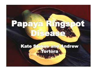 Papaya Ringspot  Disease