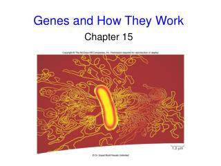 Genes and How They Work