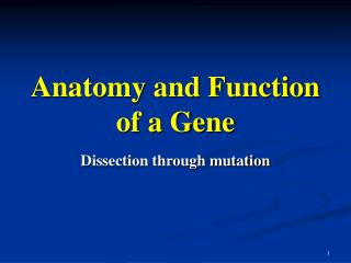 Anatomy and Function of a Gene
