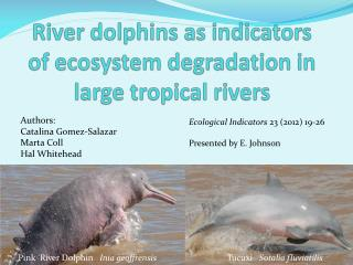 River dolphins as indicators of ecosystem degradation in large tropical rivers