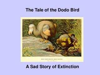 The Tale of the Dodo Bird
