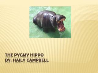 The Pygmy Hippo By:  Haily  Campbell