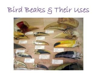Bird Beaks  Their Uses