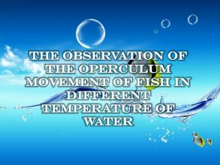 The observation of the operculum movement of fish in different temperature of water