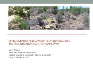 Effectiveness  and longevity of  buffelgrass  treatments in  sAguaro  National Park