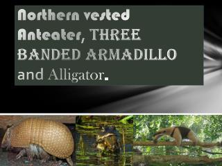 Northern vested Anteater ,  Three Banded Armadillo  and  Alligator .
