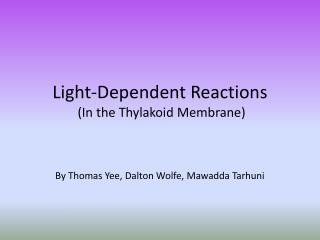 Light-Dependent Reactions  (In the Thylakoid Membrane)