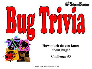 How much do you know  about bugs? Challenge #3