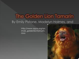 The Golden Lion Tamarin