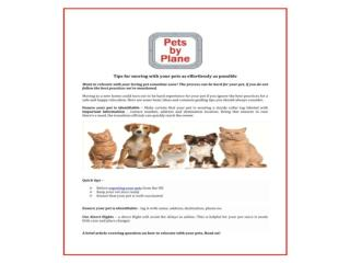 Pet relocation, Export Pets Services, Pet travel specialists