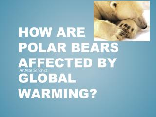 How are polar bears affected by global warming?