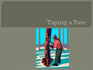 Taping a Tree