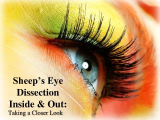 Sheep's Eye  Dissection Inside  &  Out: