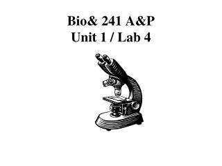 Bio& 241  A&P Unit 1 / Lab 4