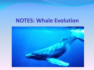 NOTES: Whale Evolution