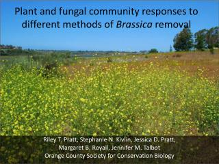 Plant and fungal community responses to different methods of  Brassica  removal