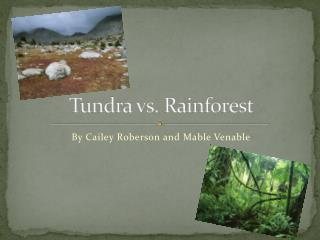 Tundra vs. Rainforest