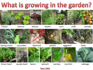 What is growing in the garden?