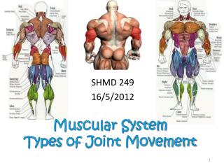 Muscular System Types of Joint Movement