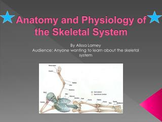 Anatomy and Physiology of the Skeletal System