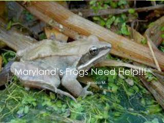 Maryland's Frogs Need Help!!!