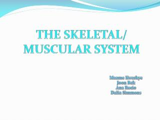 THE SKELETAL/ MUSCULAR SYSTEM