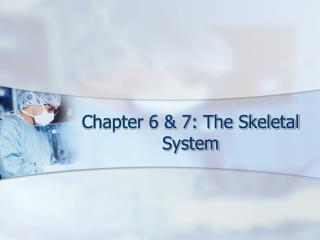 Chapter 6 & 7: The Skeletal System