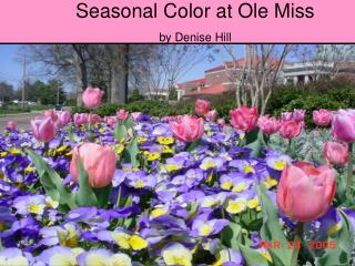 Seasonal Color at Ole Miss by Denise Hill