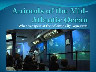 Animals of the Mid-Atlantic Ocean