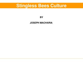 Stingless Bees Culture