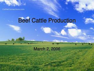 Beef Cattle Production